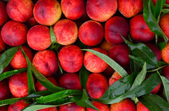 Fresh peaches background Royalty Free Stock Image