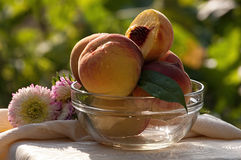 Fresh peaches on background garden in glass bowl Royalty Free Stock Images