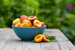 Fresh peaches in blue bowl Stock Images