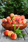 Fresh peaches in a bowl Stock Photos