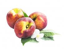 Fresh Peaches with Flower and Leaves Royalty Free Stock Photos
