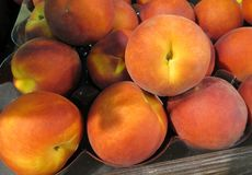 Fresh Peaches. Freshly picked peaches for eating raw or baking in pies and tarts royalty free stock image