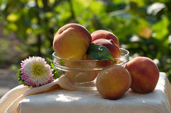 Fresh peaches in glass bowl Royalty Free Stock Image