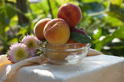 Fresh peaches in glass bowl Royalty Free Stock Photography