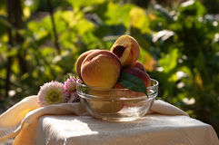 Fresh peaches in glass bowl Stock Photos