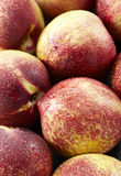 Fresh peaches, A group of colorful nectarine fruit Stock Image