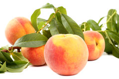 Fresh peaches Stock Photo
