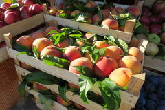 Fresh peaches at the market. In Bar-city, Montenegro Royalty Free Stock Images