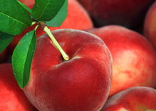 Fresh Peaches Royalty Free Stock Image
