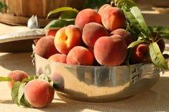 Fresh peaches in silver bowl. Fresh picked peaches in silver bowl Royalty Free Stock Photography