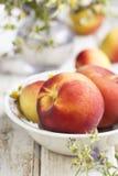 Fresh peaches in white bowl Royalty Free Stock Photos