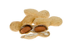 Fresh peanuts Stock Images