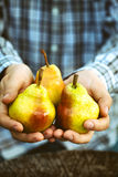 Fresh pear Royalty Free Stock Photos