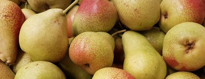 Fresh pear of the Summer Season in the area and in parks and in lawns stock photography