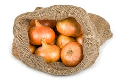 Fresh pearl onions in a burlap sack Stock Photos