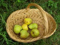 Fresh pears. In the basket Royalty Free Stock Photos