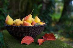Fresh pears in a basket Stock Photos