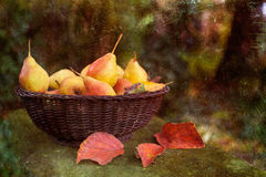 Fresh pears in a basket Royalty Free Stock Photo