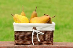 Fresh pears in basket after harvest Stock Photos