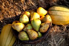 Fresh pears on hay Stock Images