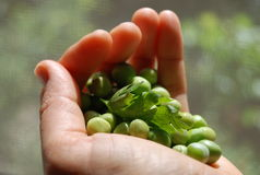 Fresh peas Royalty Free Stock Photos