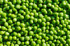 Fresh peas background Royalty Free Stock Images