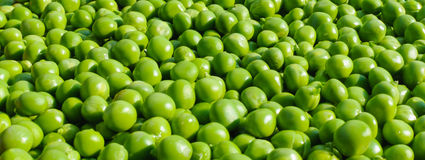 Fresh peas banner Stock Photos