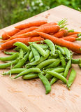 Fresh peas and carrots from the garden Royalty Free Stock Images