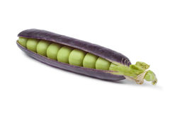 Fresh peas in purple pod Stock Photography