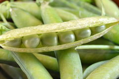 Fresh peas in their pods Royalty Free Stock Photos
