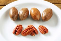 Fresh pecans Stock Photography
