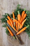 Fresh peeled carrots on green tops Royalty Free Stock Photography