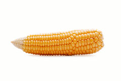 Fresh peeled corn on the cob. Sweetcorn or maize rich in carbohydrates ready for cooking on a white background Stock Photography