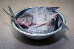 Fresh peeled raw fish in a plate. Royalty Free Stock Image