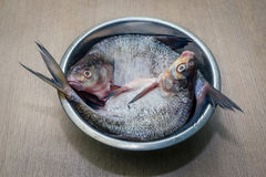 Fresh peeled raw fish in a plate. Stock Photography