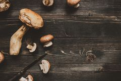 Fresh penny bun mushroom on the wooden black table, top view. Copy space Stock Photo
