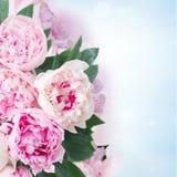 Fresh peony flowers Royalty Free Stock Photo