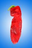 Fresh pepper Stock Photo