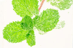 Fresh pepper mint in soda water with bubbles. Stock Photography