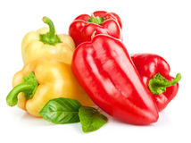 Fresh pepper vegetables Royalty Free Stock Images
