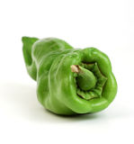 A fresh pepper on white Stock Photography