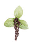 Fresh Peppercorn Design Royalty Free Stock Photos