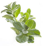 Fresh peppermint Royalty Free Stock Images