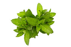 Fresh peppermint  isolated on white background Royalty Free Stock Photo