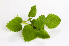 Fresh Peppermint Leafs. Isolated on white background royalty free stock image