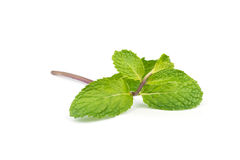 Fresh peppermint  leave. Fresh  peppermint leaves isolated on white background Stock Photography