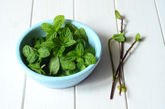 Fresh peppermint leaves Stock Photo