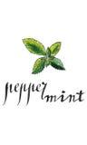 Fresh peppermint leaves. Hand drawn - watercolor vector Illustration stock illustration