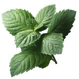 Fresh peppermint leaves (Mentha Piperita) Royalty Free Stock Photos