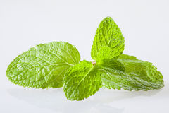 Fresh peppermint leaves Stock Photos